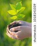 planting and watering seedlings ... | Shutterstock . vector #1018141039