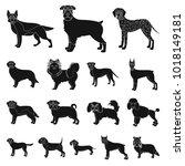 dog breeds black icons in set... | Shutterstock . vector #1018149181