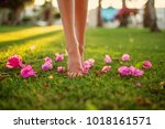 close up female crossed legs... | Shutterstock . vector #1018161571
