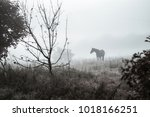 Horse In A Moody Morning Fog On ...