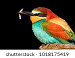 bird and mosquito in a beak on... | Shutterstock . vector #1018175419
