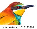 bright beautiful bird isolated... | Shutterstock . vector #1018175701