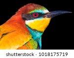 bright beautiful bird isolated... | Shutterstock . vector #1018175719
