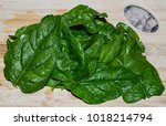 fresh whole leaf herb basil. ... | Shutterstock . vector #1018214794