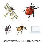 arthropods insect ladybird ...   Shutterstock .eps vector #1018253965