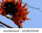 oranges flowers with blue sky... | Shutterstock . vector #1018255345