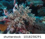 coral found at layang layang... | Shutterstock . vector #1018258291