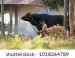 young farmer playing laptop in... | Shutterstock . vector #1018264789