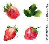 strawberry on white background. ... | Shutterstock . vector #1018272769