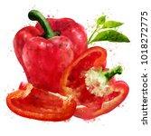 pepper on white background.... | Shutterstock . vector #1018272775
