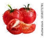 tomato on white background.... | Shutterstock . vector #1018272781