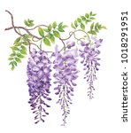 wisteria with watercolor... | Shutterstock . vector #1018291951