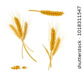 realistic detailed color wheat... | Shutterstock .eps vector #1018311547