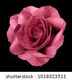 Rose Pink Flower  On The Black...