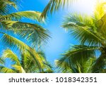 Coconut Palm Tree With Blue Sk...
