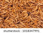worm larvae of insects | Shutterstock . vector #1018347991