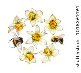 Botanical Illustration Of A...