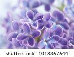 nice lilac closeup | Shutterstock . vector #1018367644