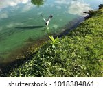 flying blue heron in a green... | Shutterstock . vector #1018384861