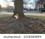 Albino White Squirrel In The...
