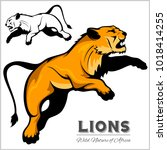 lioness   color and black white ... | Shutterstock .eps vector #1018414255
