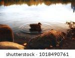 pond in an autumn park  ... | Shutterstock . vector #1018490761
