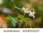 Closeup Of Begonia X Hybrida ...
