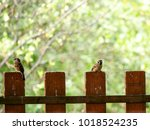 Two House Sparrows Are Sittlin...