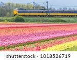 Zuid Holland  The Netherlands ...