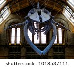 Small photo of Natural History Museum, London / UK - 02/02/18: Skull of blue whale (Balaenoptera musculus) 'Hope' in Hintze Hall.