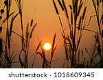 Sunset Grass Flower With Sunse...