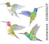 watercolor marker  tropical... | Shutterstock . vector #1018620619
