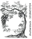 grape tree hand drawing vintage ... | Shutterstock .eps vector #1018651924