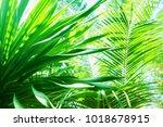 sun light through palm branches ... | Shutterstock . vector #1018678915