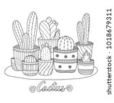Cactus For Adult And Children...