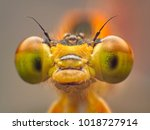 extreme macro shot eye of... | Shutterstock . vector #1018727914
