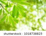 fresh light green leave over... | Shutterstock . vector #1018738825