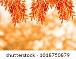 fresh light red leave over... | Shutterstock . vector #1018750879