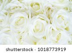 Stock photo white flower rose background white petals texture white flower and valentines day concept 1018773919