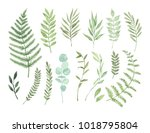 Stock vector vector watercolor illustrations botanical clipart set of green leaves herbs and branches floral 1018795804