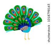 cartoon beautiful peacock bird... | Shutterstock .eps vector #1018798165