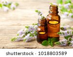 fresh purple peppermint flowers ... | Shutterstock . vector #1018803589