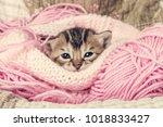 Stock photo sweet bengal kitten 1018833427