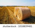 Round Straw Bales On Field ....