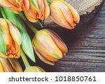 orange tulips on wood.   Shutterstock . vector #1018850761