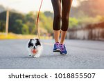 Stock photo puppy dog running exercise together with woman in the morning 1018855507