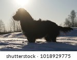 Stock photo dog in the snow silhouette terrier dog standing in the snow in frost 1018929775