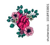 anatomical human heart with... | Shutterstock .eps vector #1018933801