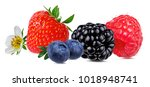berries collection. strawberry  ... | Shutterstock . vector #1018948741