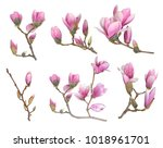 pink magnolia flower isolated... | Shutterstock . vector #1018961701